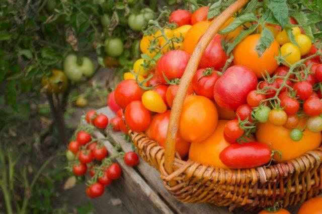 Как вырастить урожай действительно сладких томатов?