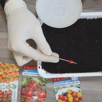 Обмакивая шпажку в каплю с водой, подцепляем семена и раскладываем их рядами