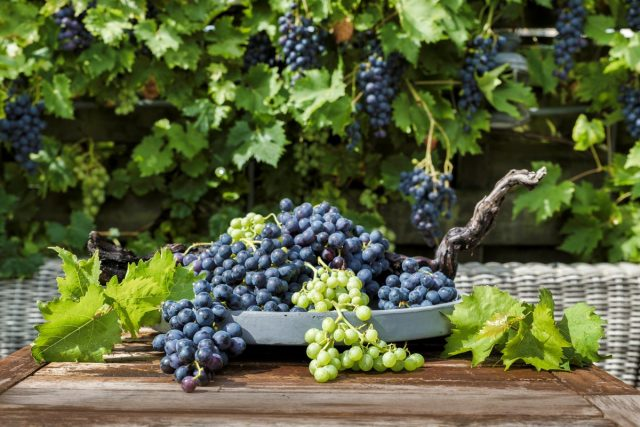 Воспитание винограда — обрезка лозы для начинающих
