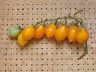Томат «Джаджу» (Giagiù, Yellow Piennolo del Vesuvio)