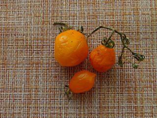 Подсохший томат «Джаджу» вкуснее, чем свежий