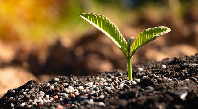 Когда есть кремний, то и растение — кремень