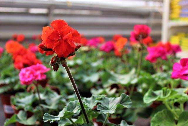 Украшения вашего дома — комнатные растения из семян