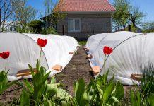 Крытые грядки — экологичная защита овощей от насекомых
