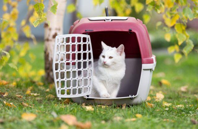 Для комфортной поездки на дачу для кошки и собаки некрупной породы лучше приобрести переноску