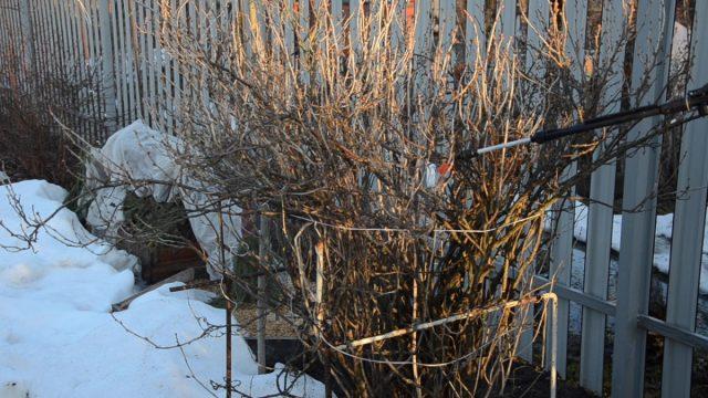 Правила ранневесенней обработки кустарников и деревьев от вредителей