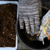 Обрезаем длинные корни и размещаем растение по центру в горшке