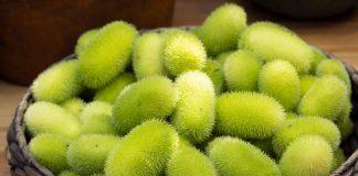 Тыква-ёж, или Огурец ворсянковый — особенности выращивания и употребления