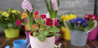 10 типичных проблем с цветением комнатных растений и их решения