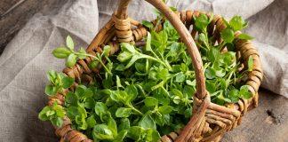 14 съедобных сорняков, которые достойны особого уважения садоводов