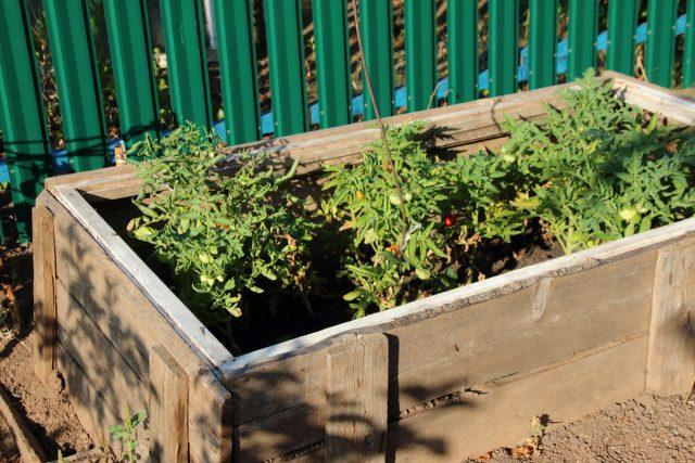 Теплые грядки для томатов стали почти необходимостью