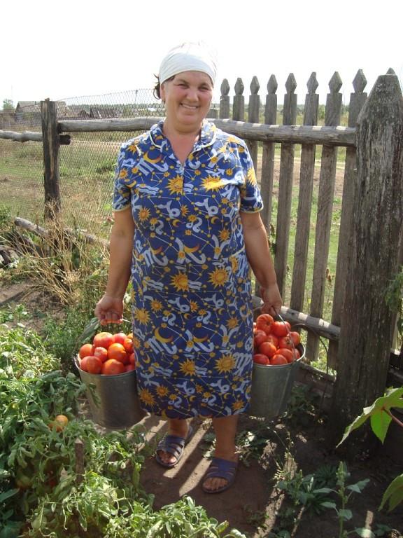 Едим собственные томаты почти круглый год
