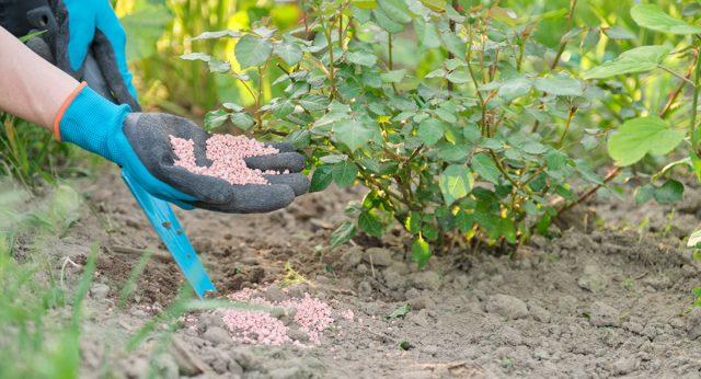 Правильно подбирайте удобрения для нужд растения