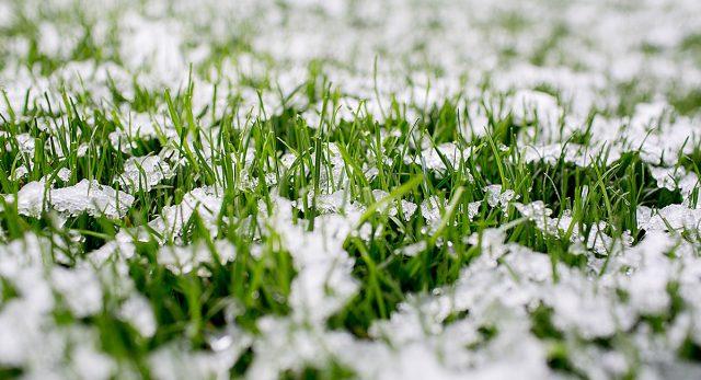 Ледяная корка может повлиять на качество газона