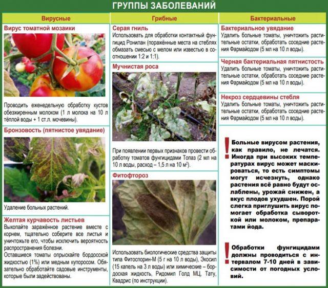 Заболевания томатов: вирусные, грибные, бактериальные