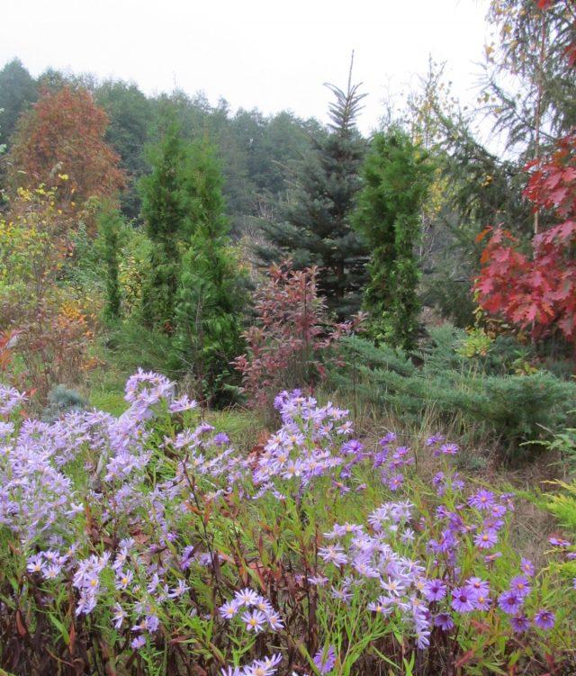 Вересковый сад сейчас
