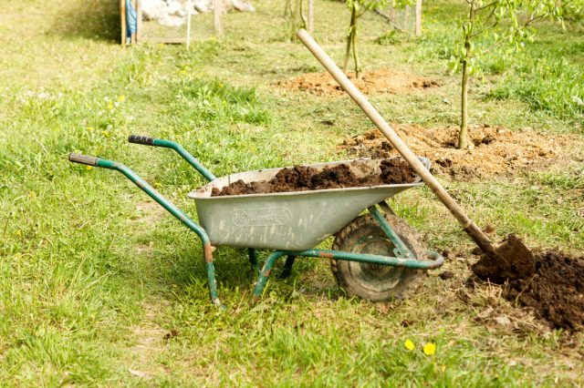 При посадке яблони в почву верхнего слоя внесите органические удобрения