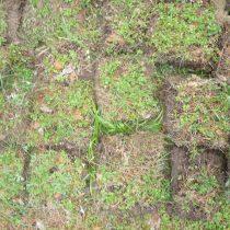 Дерновую землю получают из-под полевого дерна, нарезая на квадраты толщиной около 5 см