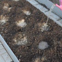 Делаем посадочные лунки, затем запрявляем их удобрениями и проливаем водой