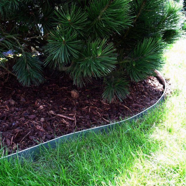 Бордюрная лента вокруг хвойного растения