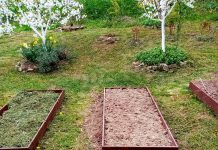 Наши грядки — для «вершков и корешков», земляники, бахчи и тыквы