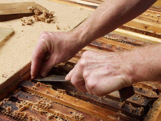 Прополис мы счищаем с рамок после откачки мёда, со стенок ульев, с подкрышника и внутриульевых перегородок