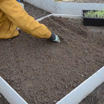Приготовьте грядку по тому же принципу, что и для высадки лука-севка