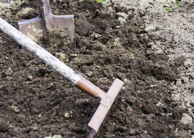 Глубокая перекопка или качественное рыхление — основа подготовки грядок для посадки лука весной