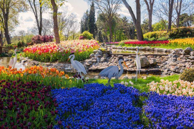 Главные события турецкого фестиваля тюльпанов традиционно проводятся в парке Эмирган
