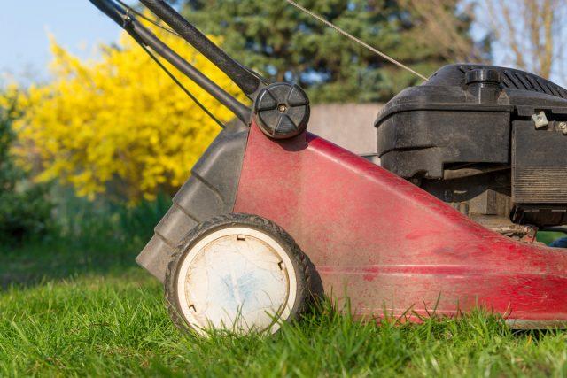 Первую стрижку на газонах проводят тогда, когда высота травы достигнет, как минимум, 8 см