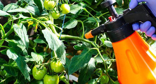 Опрыскивание растений инсектицидом