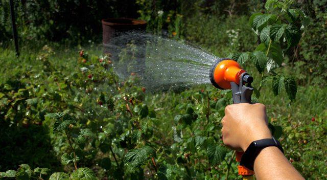 Регулярный полив – залог правильного ухода