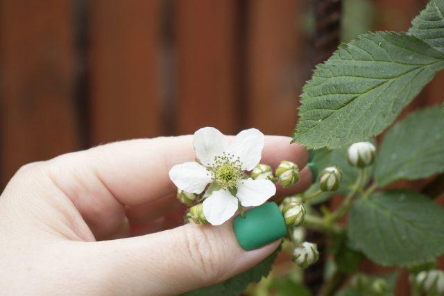 Регулярный осмотр малины поможет максимально рано заметить любые признаки заражения.