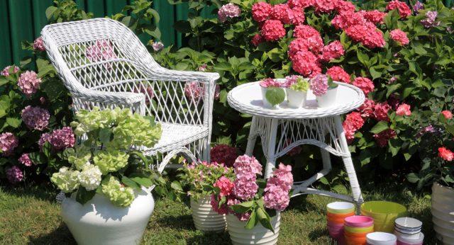 Гортензии отлично смотрятся в в оформлении сада