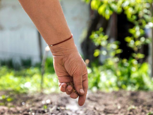 Что посеять в июле в огороде?