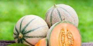 Легендарная дыня «Шаранте» — удивительные плоды с историей