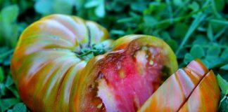 Сердцевидные томаты — особенности сортов и ухода за ними