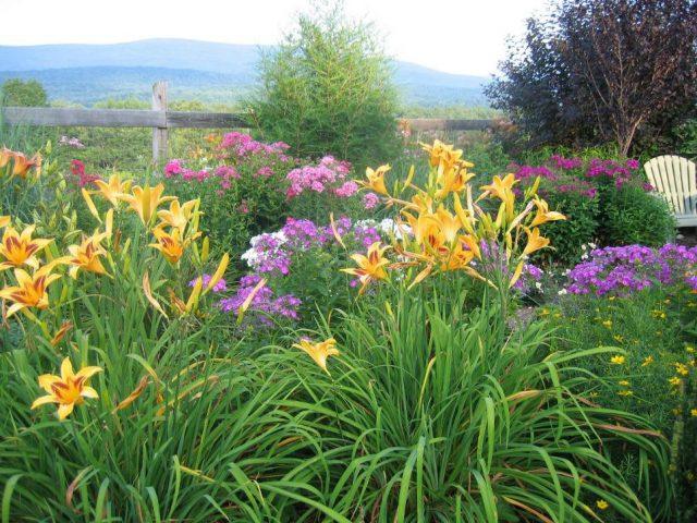 Растения, которые предпочитают полное солнце, безусловно, самая большая группа