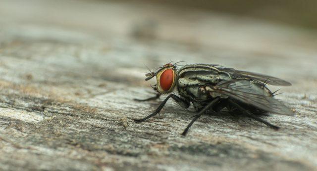 Муха – не только назойливое насекомое, но и опасный переносчик болезней