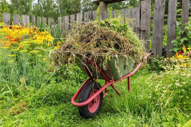 5 весомых причин, чтобы бороться с сорняками на участке