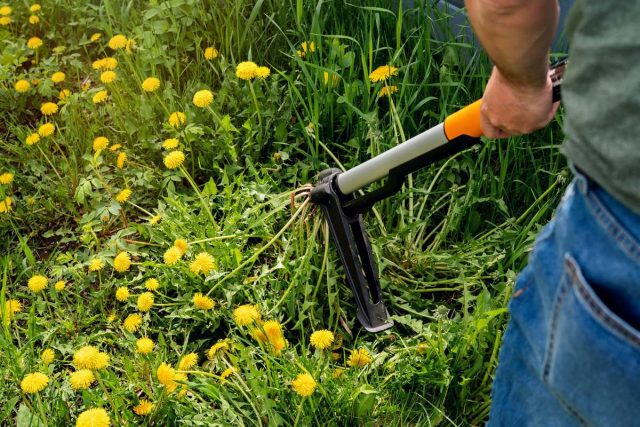 Один цветок одуванчика формирует более 200 семян