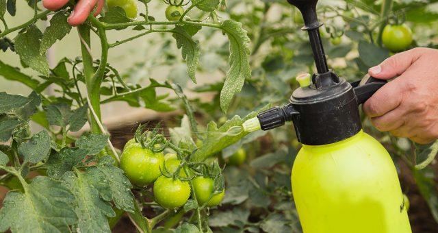 Обработка растений понадобится для дополнительной защиты