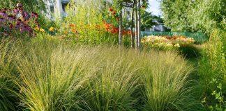 7 неприхотливых и послушных злаков для цветников средней полосы
