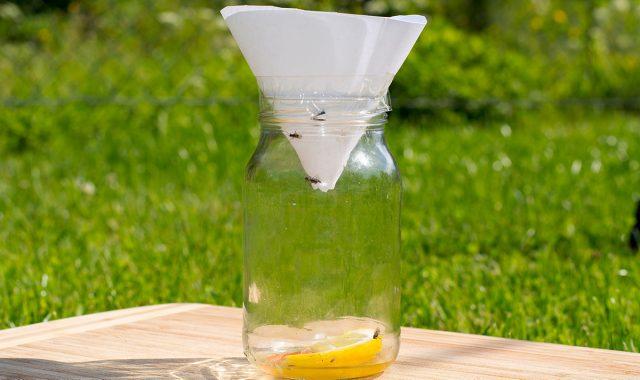 Самодельная ловушка для мух из стеклянной банки