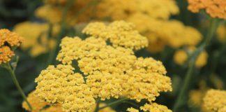 Многолетники для цветника на солнце