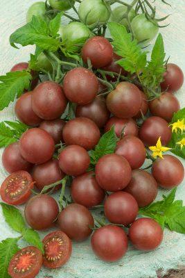 Сорт томата «Черный шоколад»