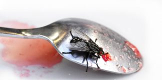 Как делать заготовки без мух?