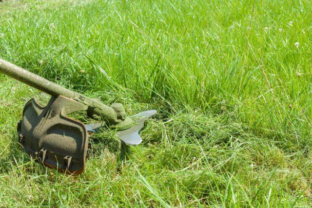 Слишком коротко скошенная трава требует гораздо большего ухода и питания