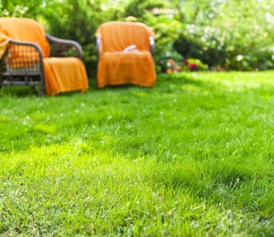 Как сохранить здоровье газона в условиях засухи?