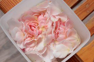 При сборе лепестков роз необходимо брать цветки в полном роспуске, но не перезревшие